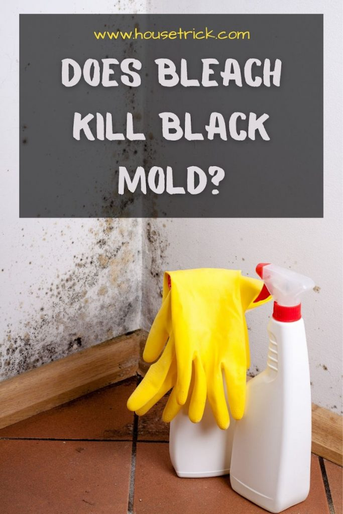 Does Bleach Kill Black Mold Answered House Trick
