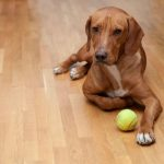 How to fix scratches in hardwood floors from a dog.