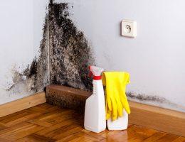 Does bleach kill black mold.