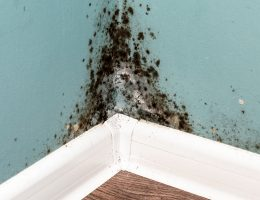 Can you kill black mold with vinegar.