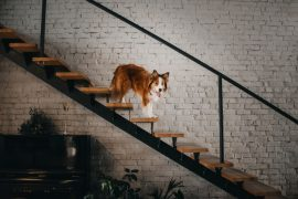Dog standing on wooden stairs.